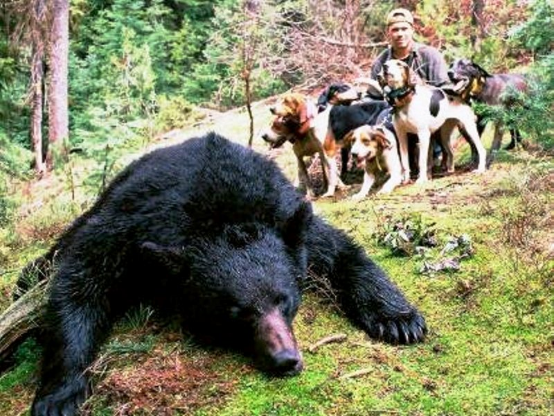 Idaho Bear Guide Brian Denney