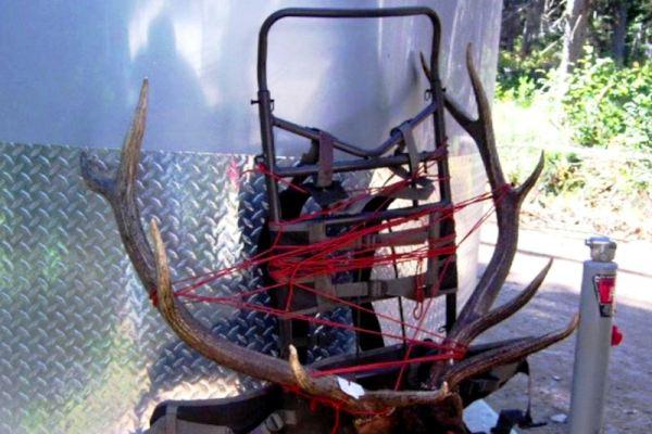 Elk Hunting Photo 5x5 On Pack