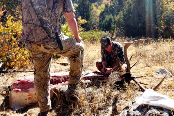 Field Dressing & Boning An Idaho Elk